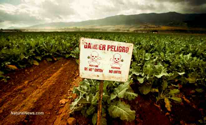 Danger-Sign-Crops-GMO