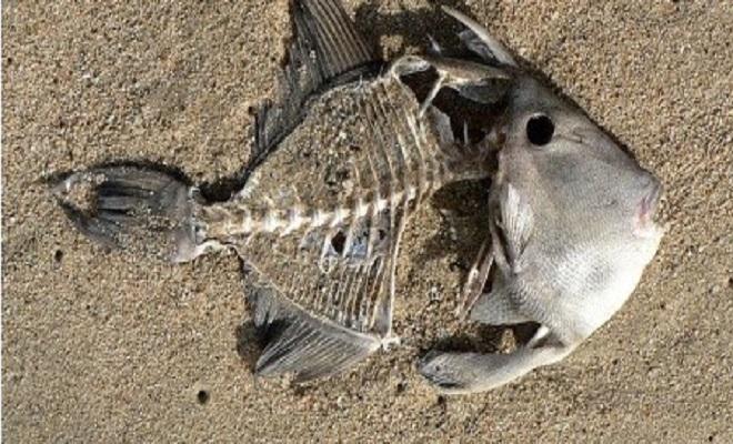 Century1-Fukushima-Fish