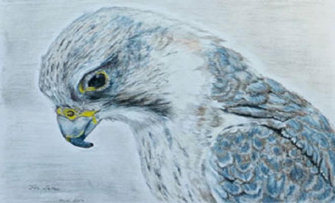 TheSakersaker-falcon-drawing-small