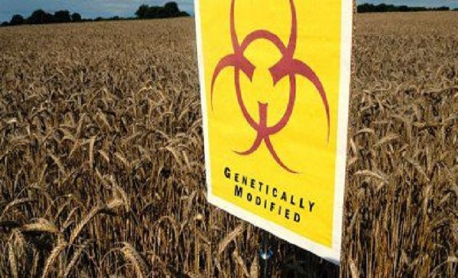 GlobalResearchMonsanto-Launches-Damage-Control-Over-GMO-Cancer-Study-400x206