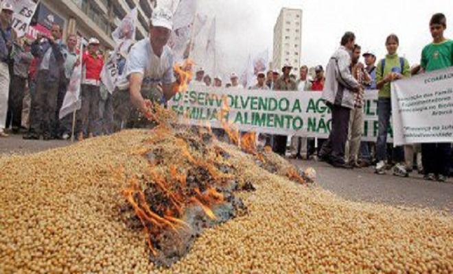GlobalResearchgmo-brazil-soybeans_735_350-400x190