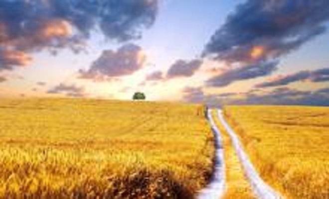 GlobalResearchukraine-wheat