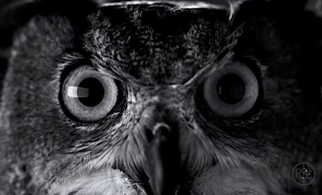 Owl NWO Shot 2017-08-17 at 10.41.32 PM