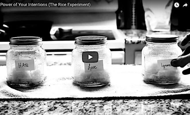 Rice Shot 2018-01-04 at 4.56.14 PM