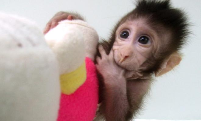 monkey clones Shot 2018-01-25 at 1.34.45 PM